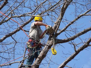 Tree-Trimmer-300x225